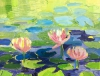 Water lilies in summer