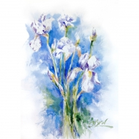 White irises on blue background